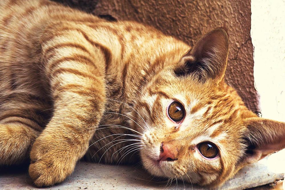 Felino come Natural Code