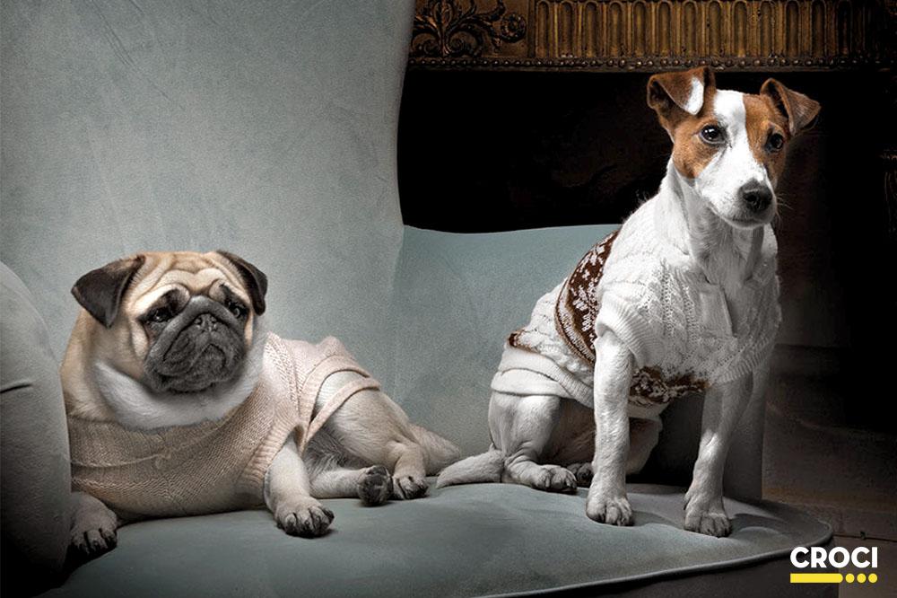Cani contemporanei